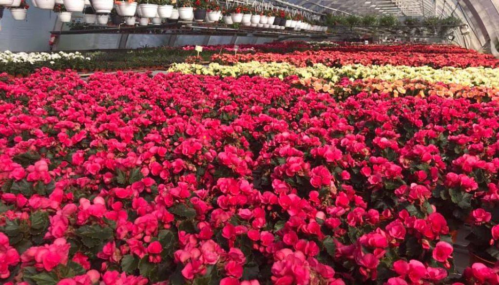 Kukkia Hyvinkää